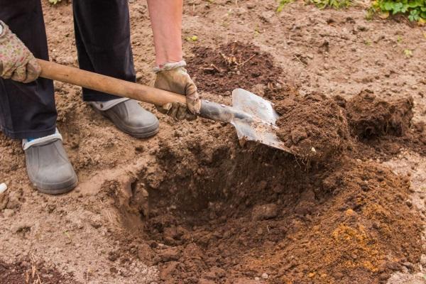 Почва для посадки войлочной вишни