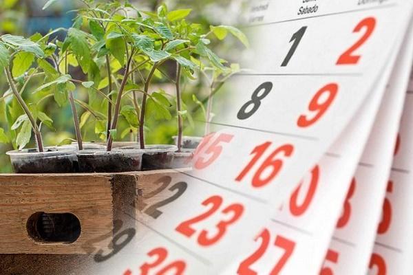 Лунный календарь для посадки томата