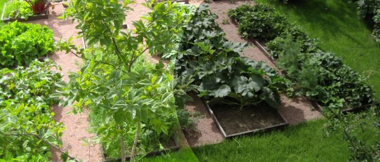 Что можно выращивать в тени?