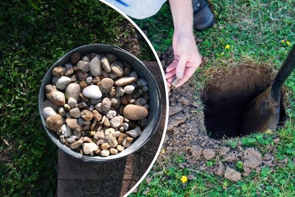 Посадочная яма для жасмина