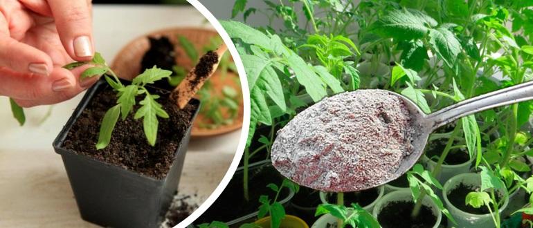 Подкормка рассады томатов после пикировки