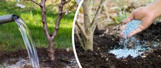 Удобрение деревьев весной