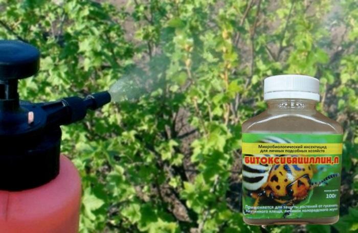 Битоксибациллин для смородины