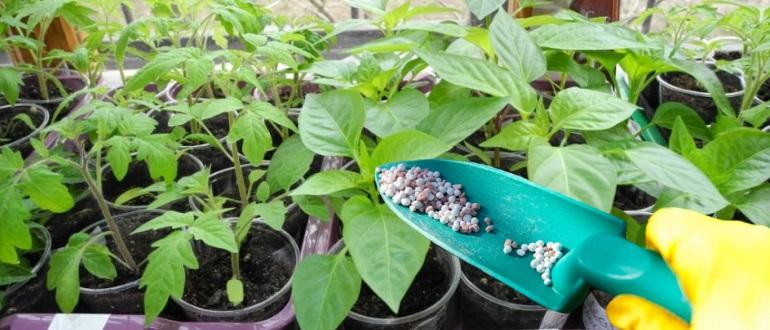 Внесение удобрений под рассаду помидор и перца