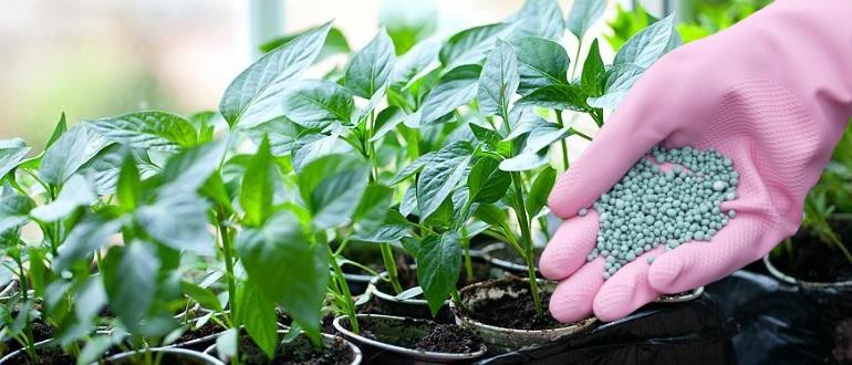 Удобрение рассады перца